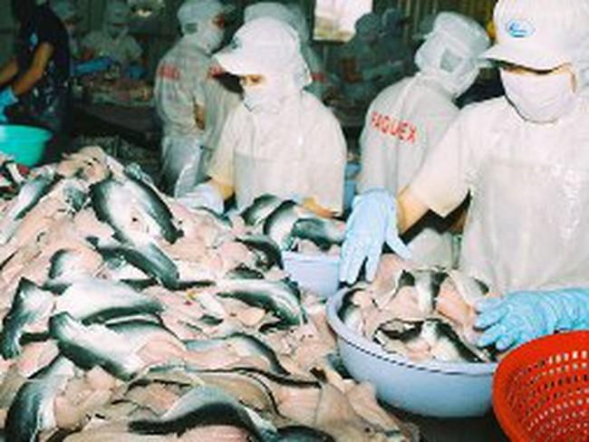 Đơn hàng mua cá tra từ EU đang tăng