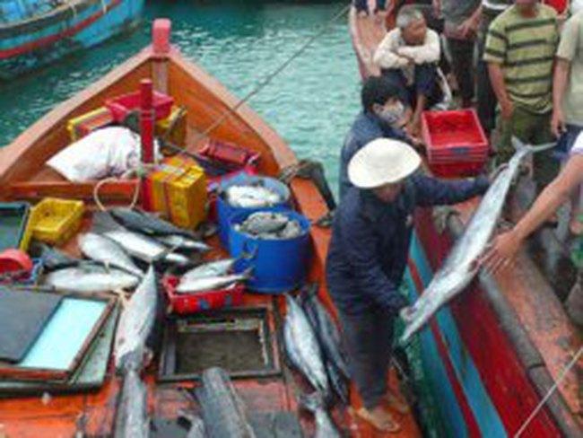 Giá hải sản tươi sống tiếp tục tăng cao