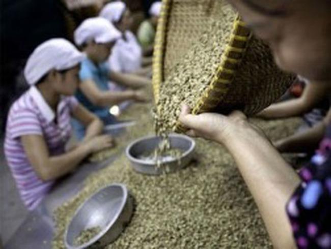 Những dấu mốc của cà phê Việt