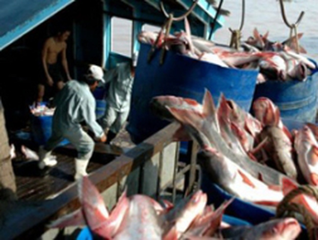 Thêm lợi thế cạnh tranh cho cá tra xuất khẩu