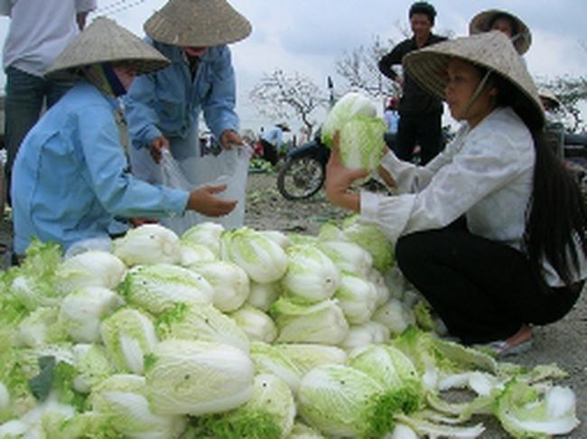 Giá rau xanh ở Hà Nội giảm 30-60%