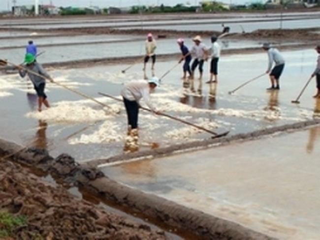 Người làm muối Bạc Liêu thất thu do mưa trái mùa