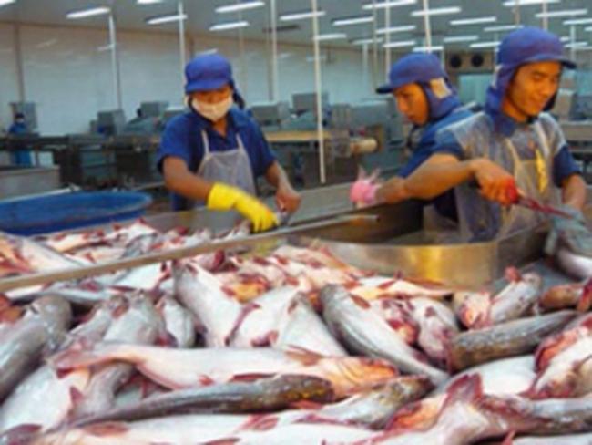 Tận dụng cơ hội tái cấu trúc ngành cá tra