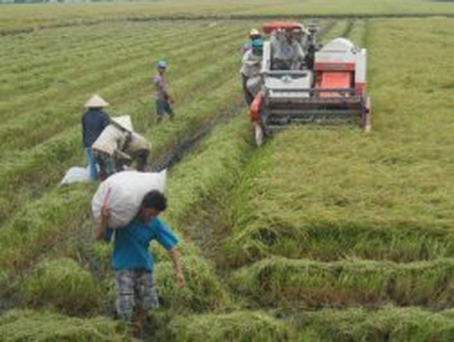 Kiến nghị tăng giá sàn mua lúa tạm trữ