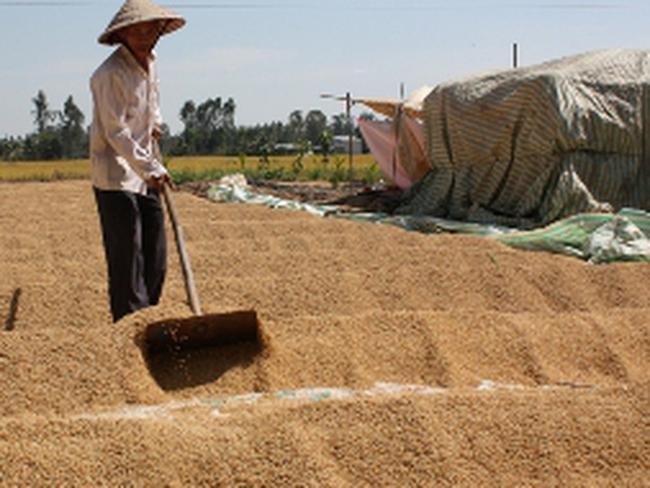 """""""Cắn răng"""" bán gạo giá thấp để khơi thông xuất khẩu"""