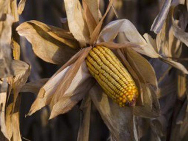 Nhiều nông sản rơi vào thị trường giá xuống