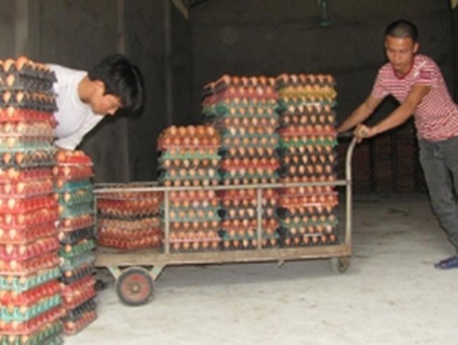 Trứng gà, vịt tiếp tục tăng thêm 3.000-4.000 đồng/chục