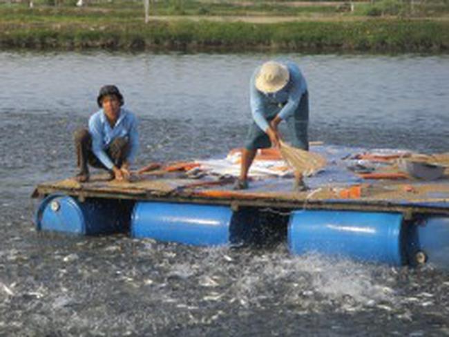 Doanh nghiệp phải ngưng bán cá cho khách hàng mới