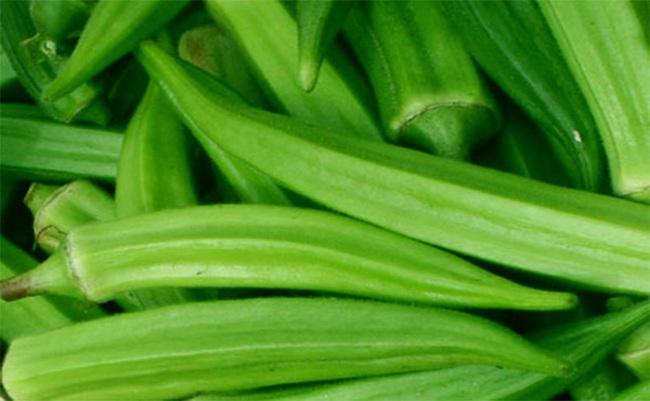 Thương lái Trung Quốc mua đậu bắp xanh bằng... hợp đồng miệng