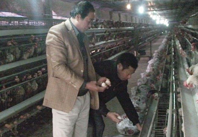 Làm giàu từ mô hình nuôi gà siêu trứng