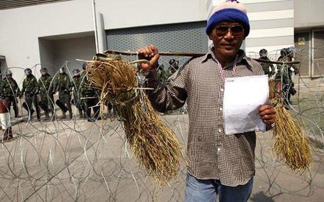 Thái Lan bất ngờ bỏ trợ giá lúa gạo