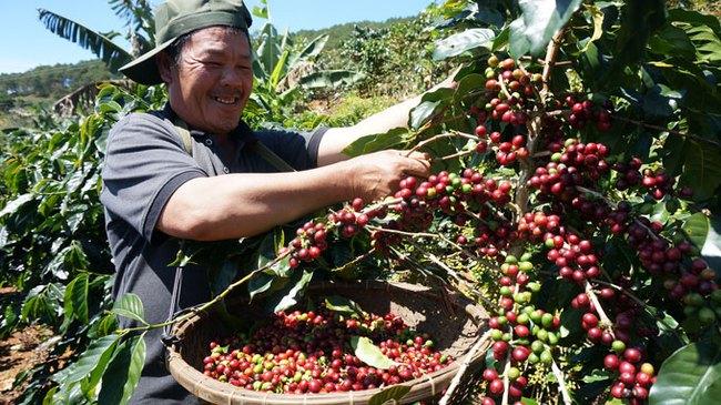Lập hội sản xuất cà phê bền vững