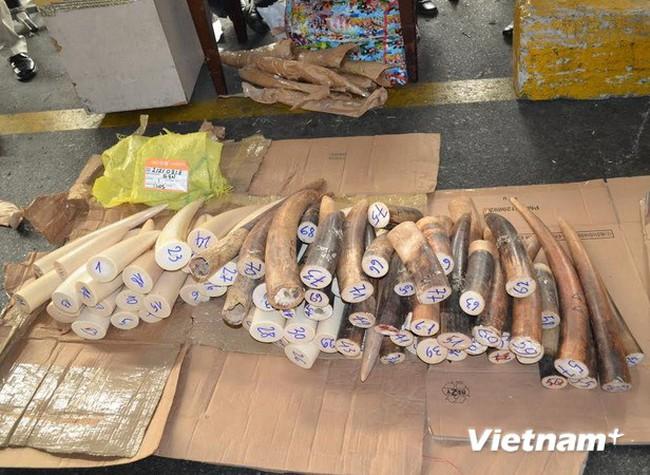 Bắt 77 chiếc ngà voi nhập trái phép qua sân bay Tân Sơn Nhất
