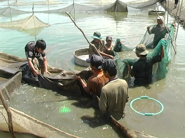 Giá cá lóc, cá tra tăng
