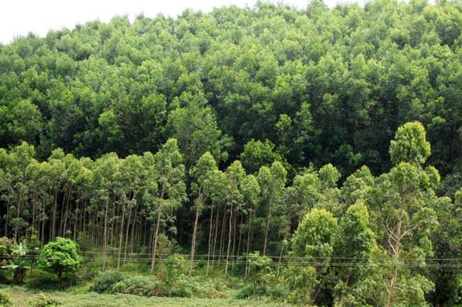 Thu 1.200 tỷ đồng từ dịch vụ môi trường rừng mỗi năm