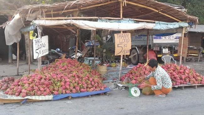 Thê thảm thanh long 2.000 đồng/kg bán đầy đường