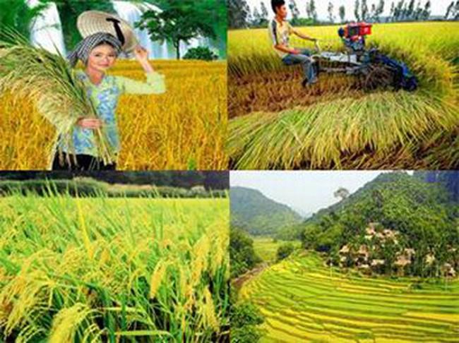 JICA hỗ trợ tích cực cho nông nghiệp Việt Nam