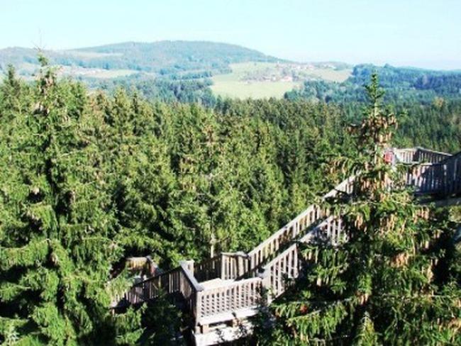Đường đi trên ngọn cây dài nhất thế giới