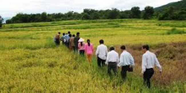 Đà Nẵng hoàn thiện vùng sản xuất lúa giống