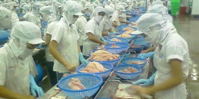 Giá cá tra xuất khẩu sang Mỹ tăng gần 4%