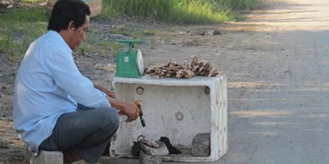 Hô biến cút nuôi thành… chim rừng