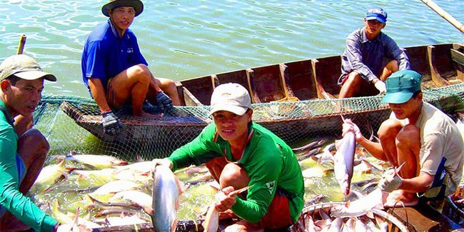 Sản xuất - xuất khẩu cá tra: Đã khó, đang khó và sẽ… càng khó