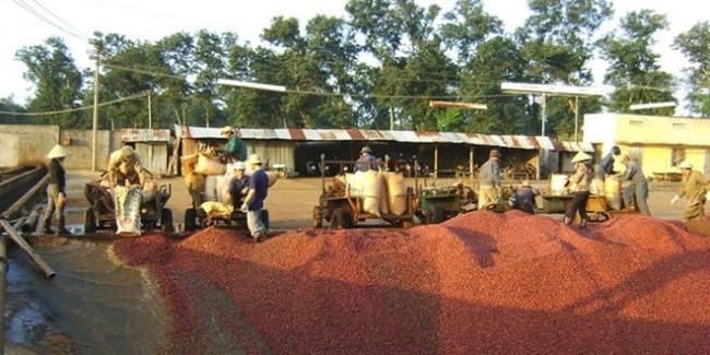 Trung Quốc gia tăng thu mua nông sản Việt