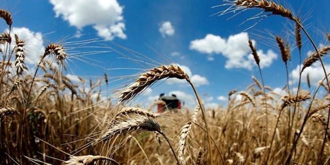 Nga dựng các hàng rào thuế quan để hạn chế xuất khẩu ngũ cốc