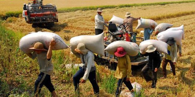 Việt Nam xuất 7,7 triệu tấn gạo trong năm 2014