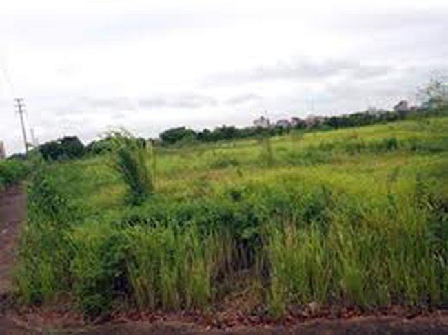 Chuyện lạ giữa Hà Nội: Đòi đổi đất nông nghiệp lấy đất sổ đỏ