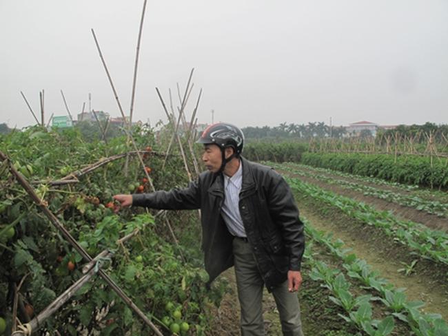 Nhiều băn khoăn về dự án công viên hồ điều hòa Văn Miếu (Bắc Ninh)