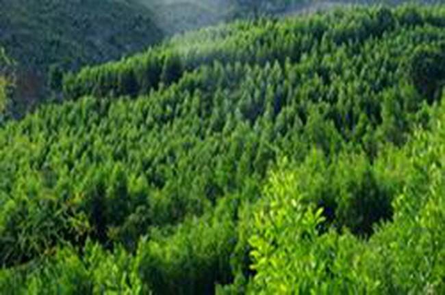 Công bố quy hoạch sử dụng đất đến 2020 của Thừa Thiên Huế và Kon Tum