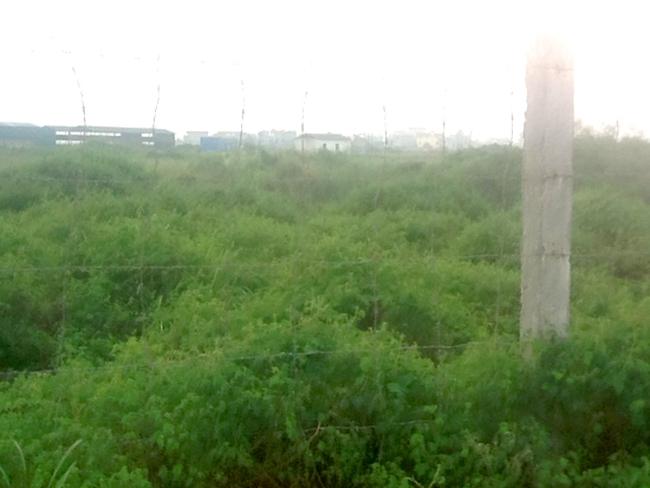 """""""Mục sở thị"""" khu đô thị nghìn tỷ bỏ hoang của Cienco5"""