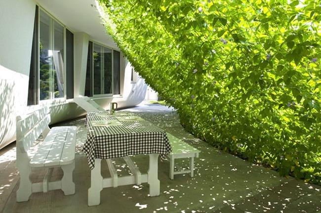 Mang luồng khí tươi mát vào căn nhà mùa hè
