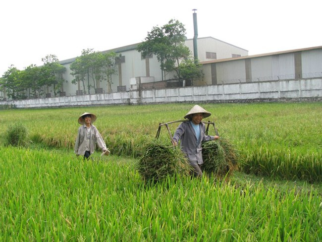 Quảng Ninh chuyển 280 ha đất trồng lúa sang đất dự án