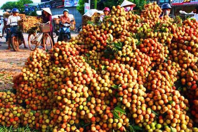 """Săn """"tấm vé"""" đi Mỹ cho trái cây Việt"""