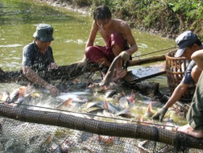 Kiến nghị Chính phủ cứu ngành tôm, cá tra