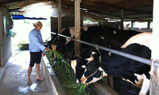 Thí điểm bảo hiểm nông nghiệp: Còn nhiều bất cập