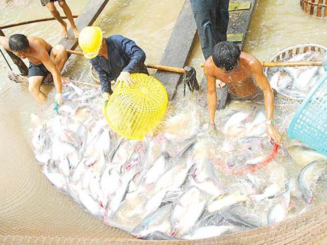 Cơ cấu thủy sản xuất khẩu: Nhiều thay đổi