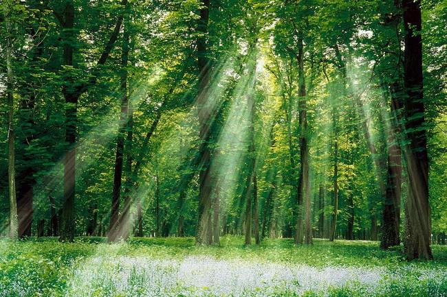 Hàng loạt doanh nghiệp vi phạm về bảo vệ môi trường