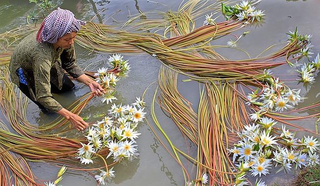 Tỷ lệ lao động nữ tại Việt Nam thuộc nhóm cao nhất thế giới, mừng hay lo?