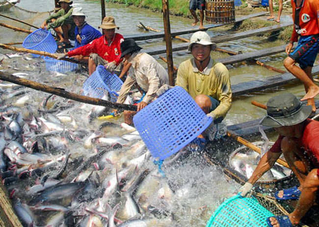 Thủy sản Hùng Vương lên kế hoạch phát hành riêng lẻ 300 tỷ đồng trái phiếu