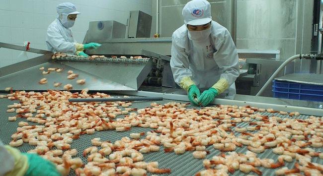 Thủy sản Minh Phú: Lãi ròng 9 tháng đạt 565 tỷ đồng, tăng trưởng 263%