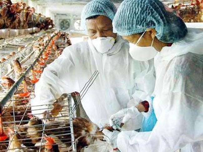 Dịch bệnh làm chết trên 700.000 gia súc, gia cầm