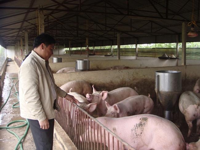 Người nuôi lợn cạn vốn