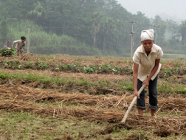 5 chính sách thay đổi nông nghiệp Việt Nam