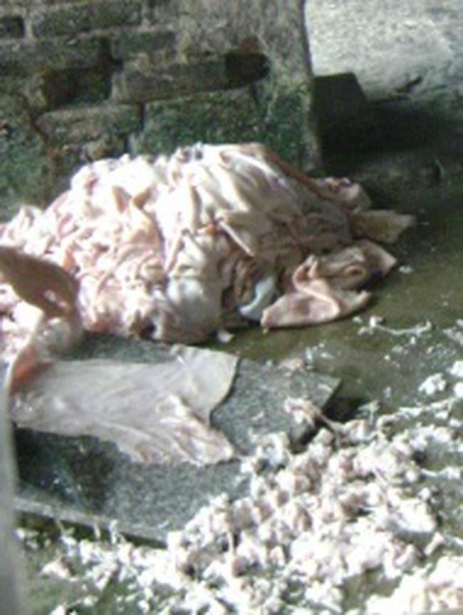 Bóng bì từ 'hang ổ' thịt thối: Dân đang bị đầu độc