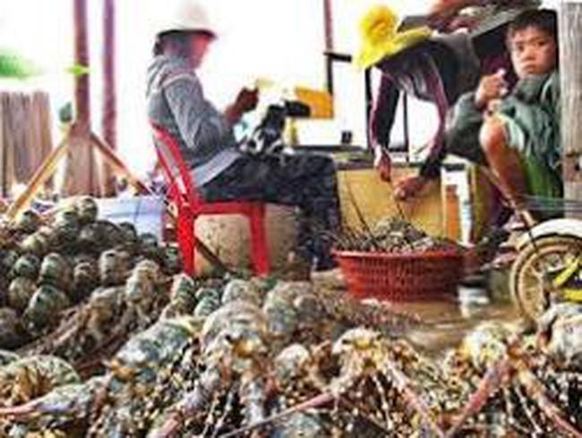 Thành lập Trung tâm dự báo ngư trường khai thác hải sản
