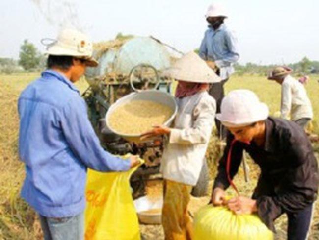 Ai hưởng lợi từ hạt gạo xuất khẩu?