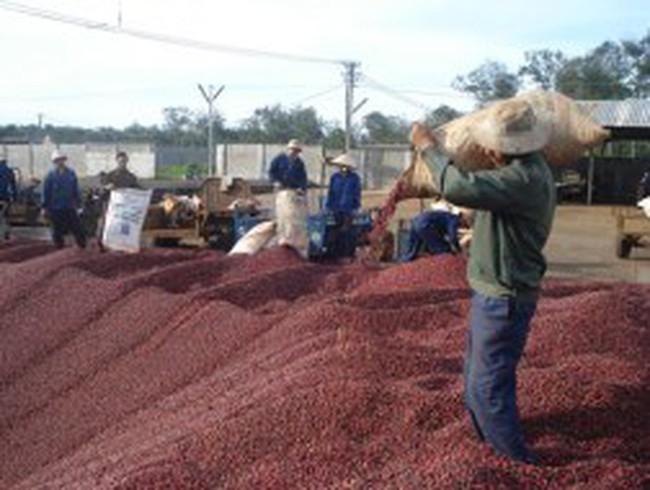 Nợ xấu ngành cà phê hơn 6.300 tỷ đồng